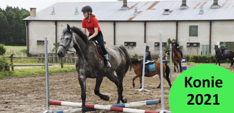 Letni wyjazd na konie i kuce 2021
