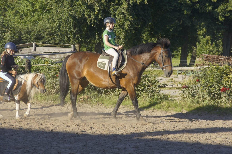 Konie w październiku